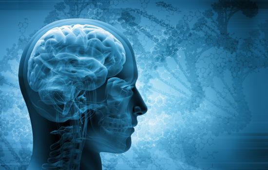 cervello cognitivo