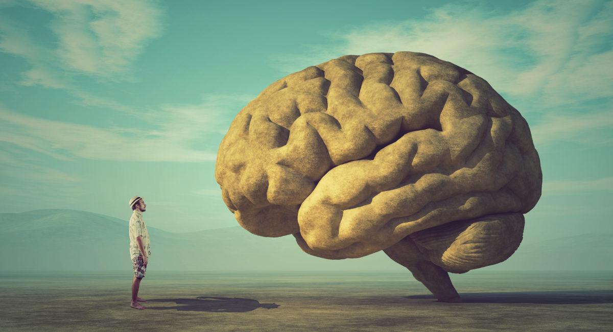 Amigdala cervello