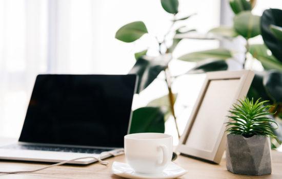 stress ufficio piante