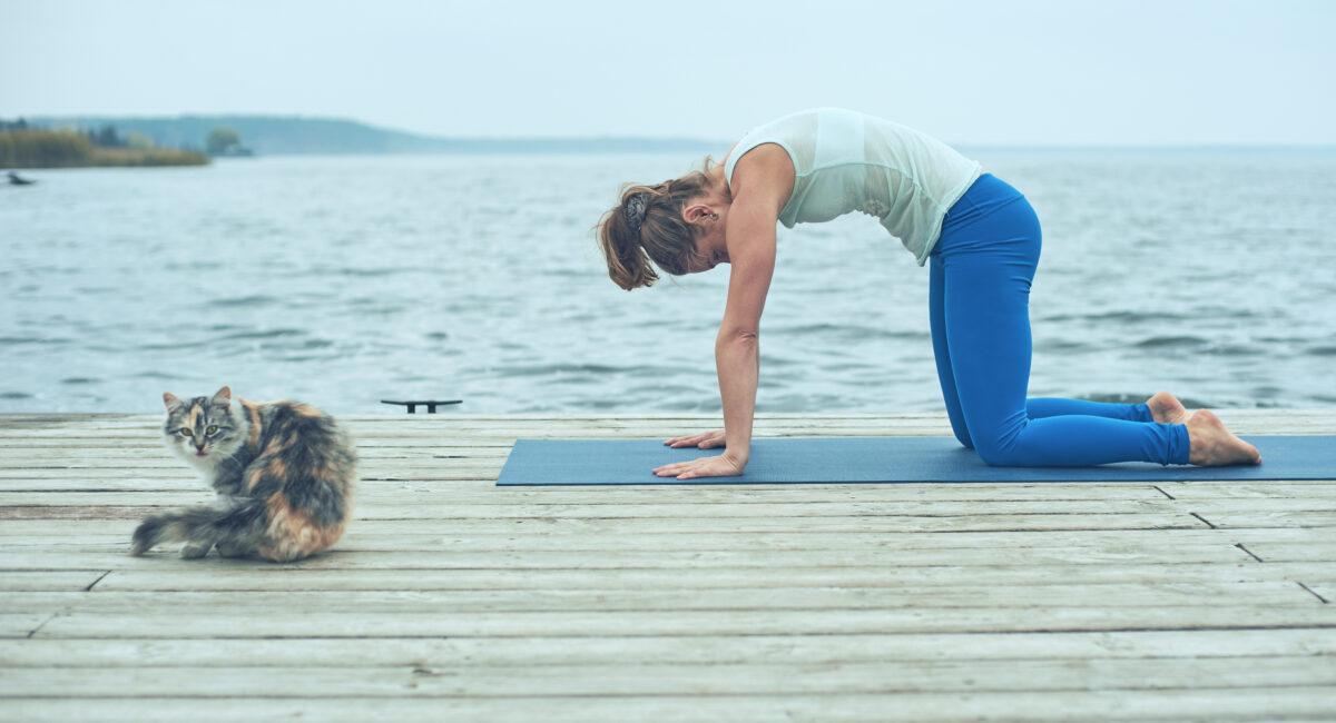 yoga gatto